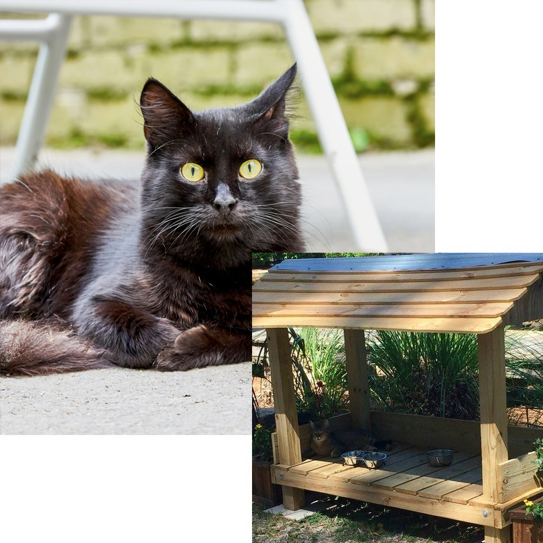 imagen-home-02-colonias-felinas-navarra